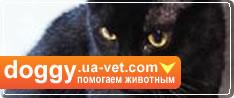 Помогай бездомным животным Украины. Присоединяйся!